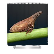 Widefooted Treehopper II Shower Curtain by Clarence Holmes