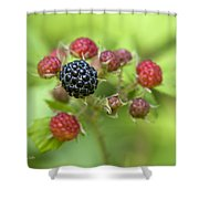 Wild Berries Shower Curtain by Christina Rollo