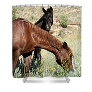 Wild Horse Mama And Her Baby Shower Curtain by Sabrina L Ryan