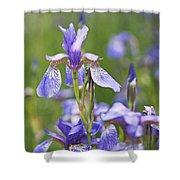Wild Irises Shower Curtain by Rona Black