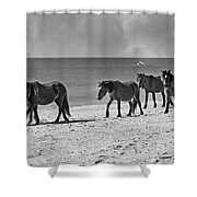 Wild Mustangs of Shackleford Shower Curtain by Betsy C  Knapp