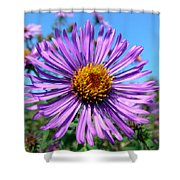 Wild Purple Aster Shower Curtain by Christina Rollo