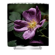 Wild Rose Shower Curtain by Rona Black