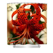 Wild Smokies Lily Shower Curtain by Karen Wiles