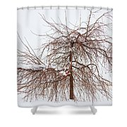Wild Springtime Winter Tree Shower Curtain by James BO  Insogna