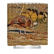 Wild Turkey Shower Curtain by Al Powell Photography USA