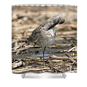 Willet Shower Curtain by James Peterson