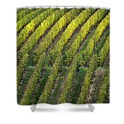 Wine Acreage In Germany Shower Curtain by Heiko Koehrer-Wagner