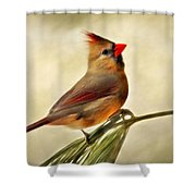 Winter Cardinal Shower Curtain by Christina Rollo