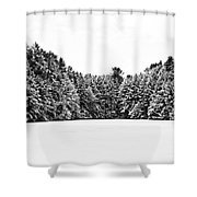 Winter Trees Mink Brook Hanover Nh Shower Curtain by Edward Fielding