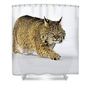 Winter Walk Shower Curtain by Jack Milchanowski