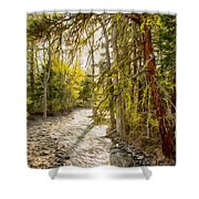 Wolf Creek Afternoon Light Shower Curtain by Omaste Witkowski