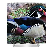 Wood Duck Shower Curtain by Cynthia Guinn