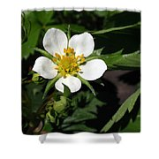 Wood Strawberry Shower Curtain by Christina Rollo