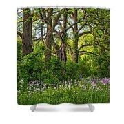 Woodland Phlox 2 Shower Curtain by Steve Harrington