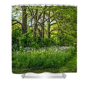 Woodland Phlox Shower Curtain by Steve Harrington