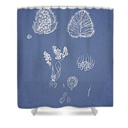 Woodsia Lanosa Shower Curtain by Aged Pixel