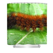 Wooly Bear  Shower Curtain by Joshua Bales
