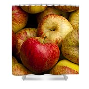 Worcester Pearmain Shower Curtain by Anne Gilbert