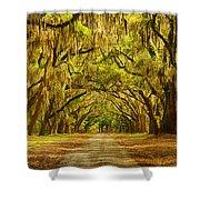 Wormsloe Plantation Oaks Shower Curtain by Priscilla Burgers