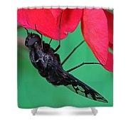 Xenox Tigrinus Shower Curtain by Juergen Roth