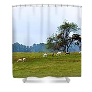 Yellow Fields Shower Curtain by Jan Amiss Photography