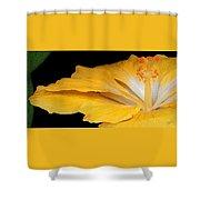 Yellow Hibiscus. Detail Shower Curtain by Ben and Raisa Gertsberg