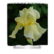 Yellow Iris Shower Curtain by Sandy Keeton