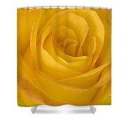 Yellow Tea Rose Shower Curtain by John Pitcher