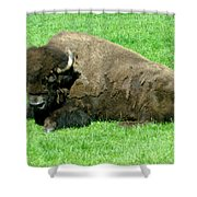 You Tell Him He Needs To Lose Weight Shower Curtain by Jeff Swan
