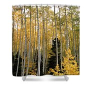 Young Aspens Shower Curtain by Eric Glaser