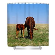 Young Colt And Mother Shower Curtain by Jeff Swan