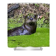 Young River Otter Egan's Creek Greenway Florida Shower Curtain by Dawna  Moore Photography