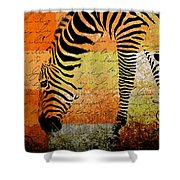 Zebra Art - Rng02t01 Shower Curtain by Variance Collections