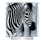 Zebra Shower Curtain by Kathleen Struckle