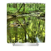 Zen In The Forest Shower Curtain by Adam Jewell