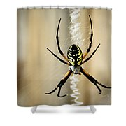 Zig Zag Is More Fun Shower Curtain by Penny Lisowski
