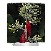 Atlantic Forest Bromeliad Brazil Shower Curtain by Mark Moffett