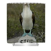 Blue-footed Booby Sula Nebouxii Shower Curtain by Pete Oxford