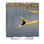 Brown Vine Snake, Oxybelis Aeneus Shower Curtain by Jack Goldfarb