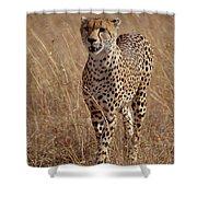 Cheetah Acinonyx Jubatus Portrait Shower Curtain by Gerry Ellis