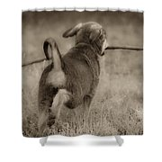 Classic Shower Curtain by Kim Henderson