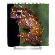 Clown Tree Frog Shower Curtain by Dante Fenolio