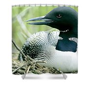Common Loon, La Mauricie National Park Shower Curtain by Philippe Henry