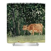 Cow In Pasture Shower Curtain by Winslow Homer