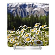 Daisies At Mount Robson Provincial Park Shower Curtain by Elena Elisseeva