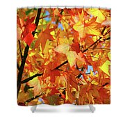 Fall Colors Shower Curtain by Carlos Caetano