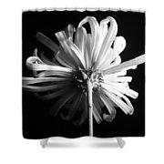 Flower Shower Curtain by Sumit Mehndiratta