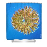 Micrasterias Shower Curtain by Michael Abbey and Photo Researchers