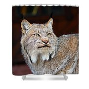 North American Lynx Shower Curtain by Paul Fell